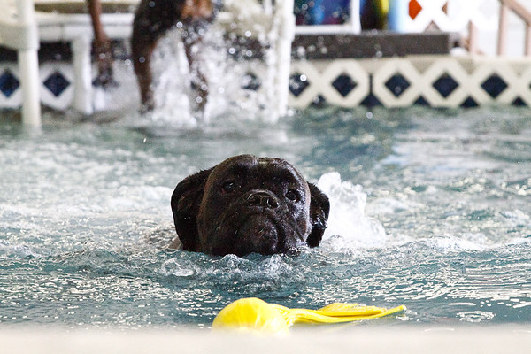 Dog Swimming 2011
