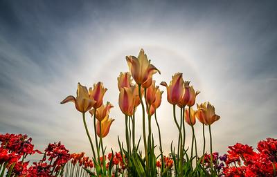 2021-04-30 Portland Wildflowers