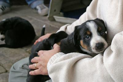 Van het Bressershof - Puppy's !!