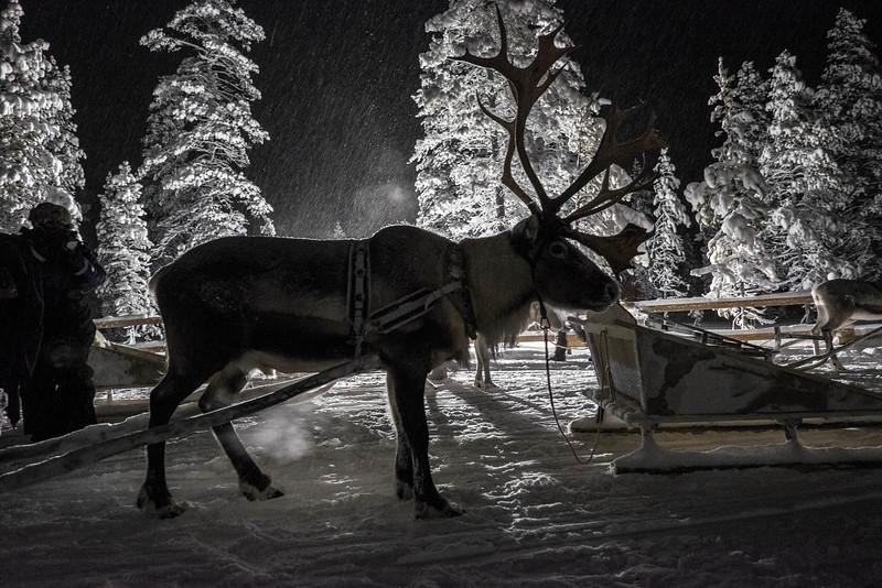 Finland_160117_134.jpg