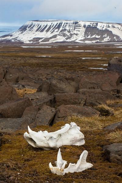 Svalbard - High Res-39.jpg