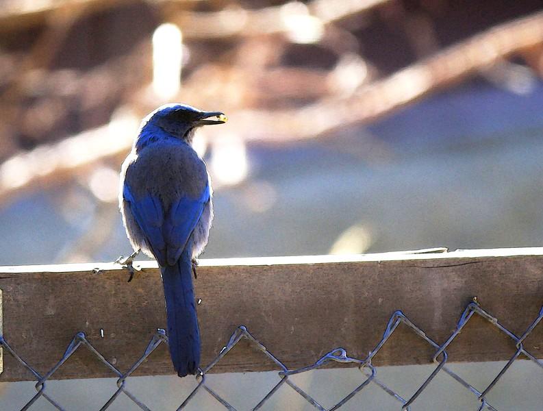 birds (179).jpg