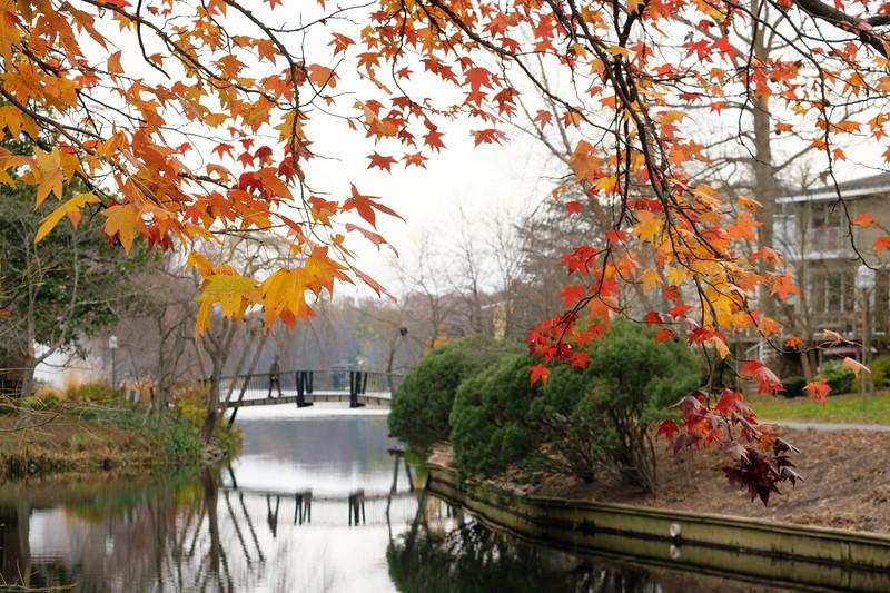 Fall foliage at the Van Gogh Bridge