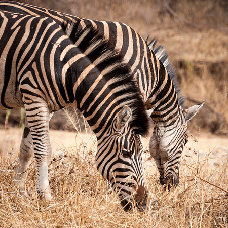 2017 Best of South Africa - Animals