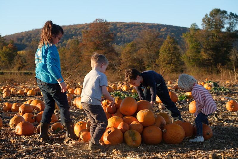 20161107 132 Great Country Farms.jpg