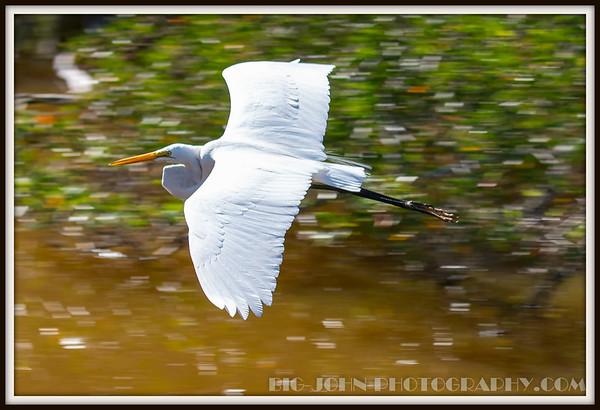 Everglades National Park @ Flamingo 2-12-16