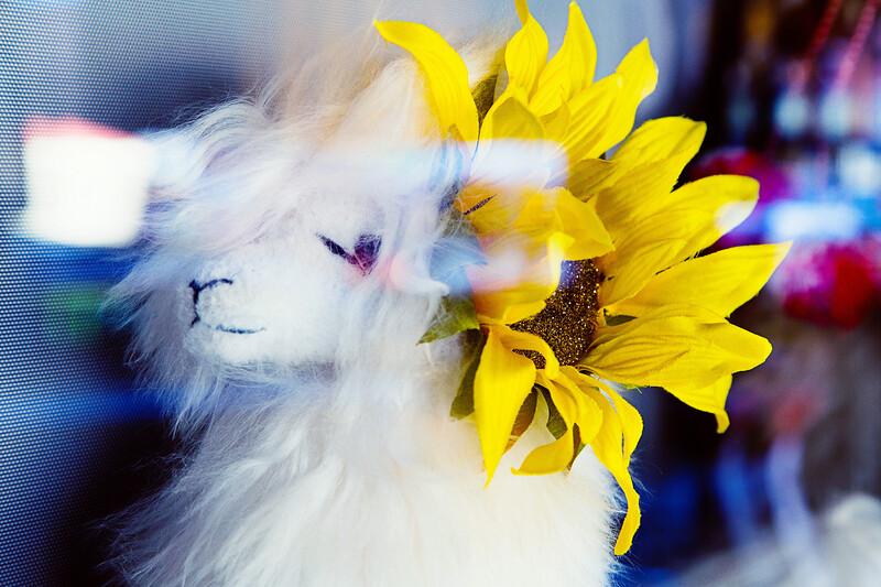 LLama with Sunflower
