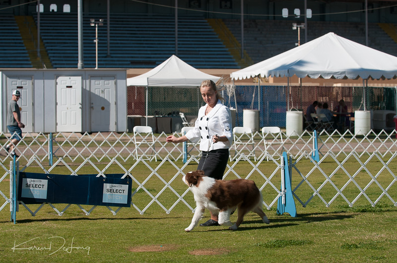 20170205_Australian Shepherds_Lost Dutchman Kennel Club-174.jpg