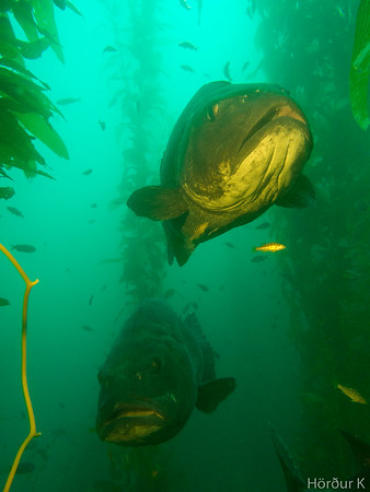 Casino Point - PCH Dive Bash, October 2016