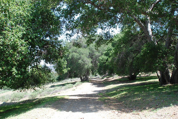Sable Ranch Forest