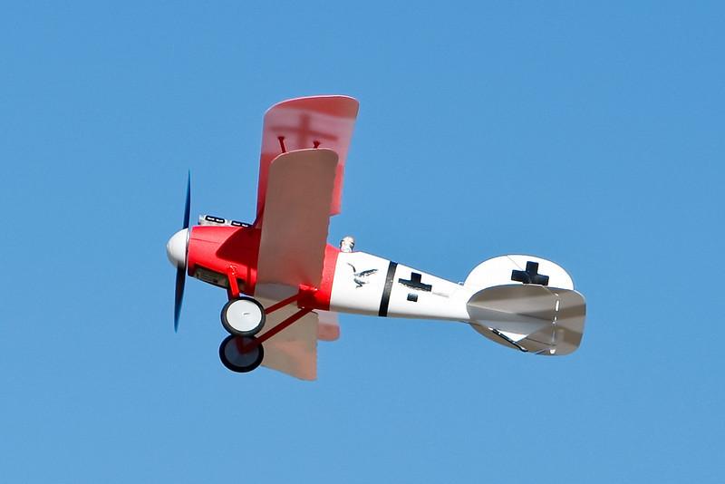 FZ_AlbatrosDV_04.jpg
