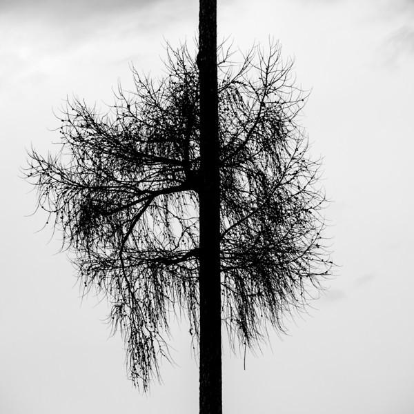 Tree silhouette 9