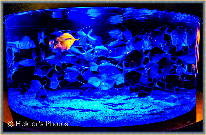acquarium-9.jpg