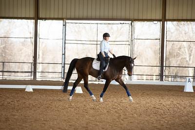 Horse 62