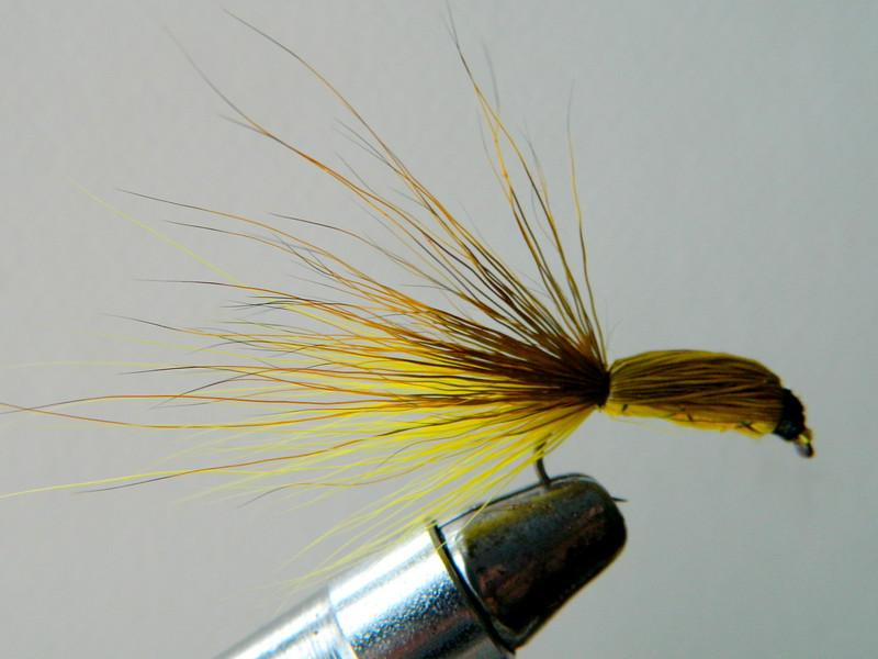 Yellow Squirrel Tail. jan 28, 2020.