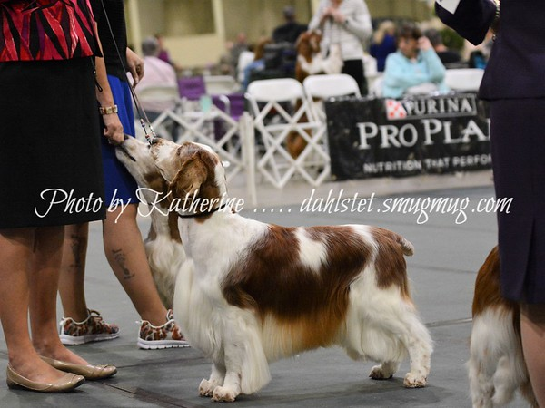 WSSCA 2018 - National Specialty - Vets & BOB Dogs /Sat 26May