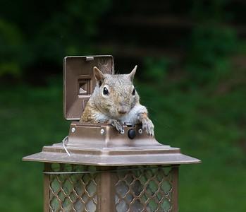 07-13-2019-squirrel