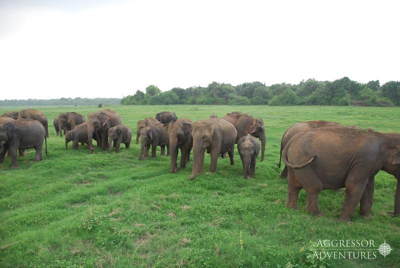 srilanka-animals-wm9.jpg
