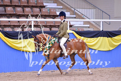 Class 30 Lrg Show Hunter Pony