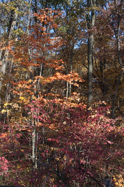 20121021-2012-10-2116-50-2513236.jpg