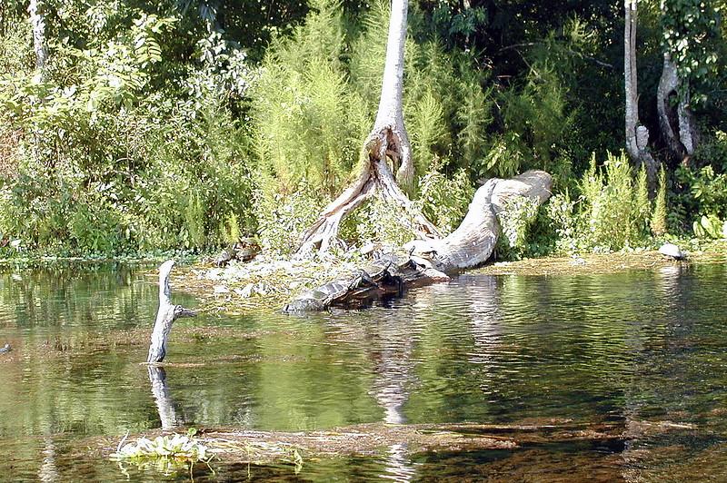 Mississippi River Wildlife MN.jpg
