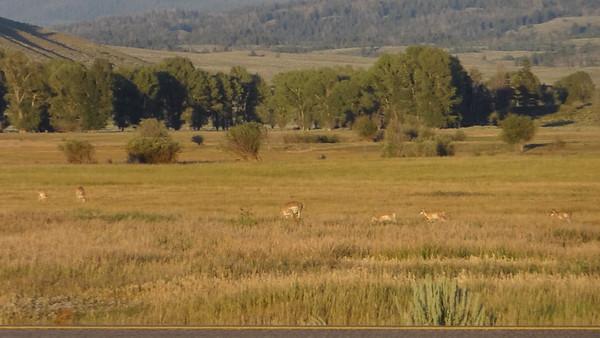 Teton Valley / Jackson Hole Wyoming -- August 2013