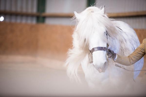 Milton Equestrian Centre Valentines Show