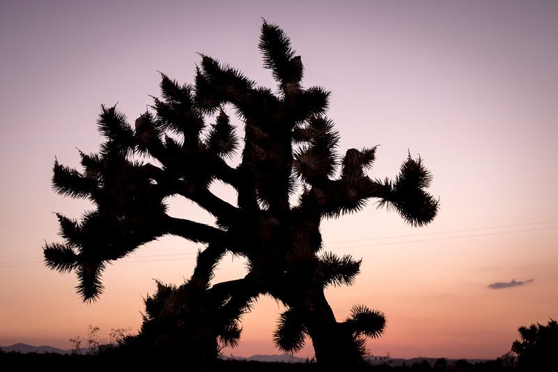 Sunset at Joshua Tree National Park in Mojave Desert, California