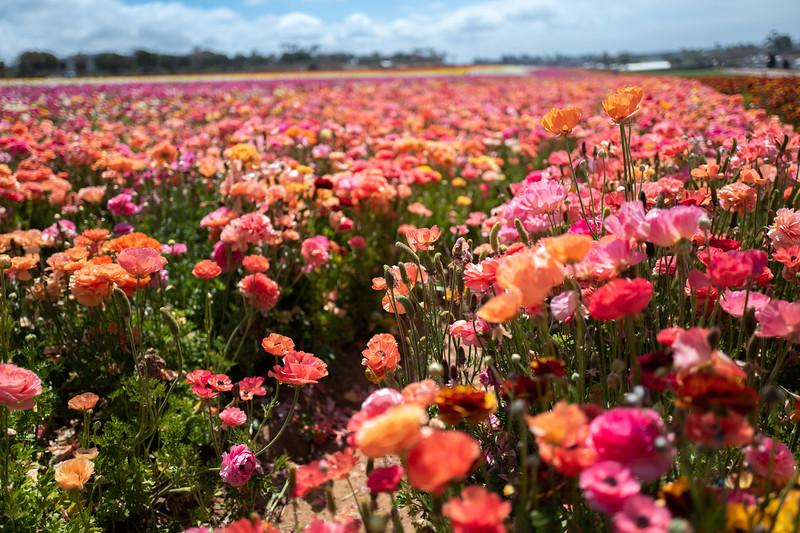 Spring Flowers A-171.jpg