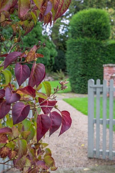 Hob Green autumn-10.jpg