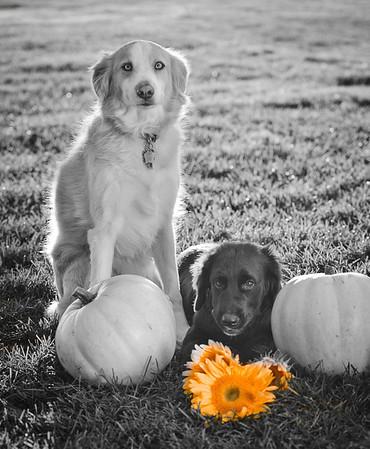 Sulley Puppy Pics