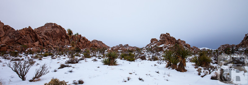 Snow in Joshua Tree National Park 2019