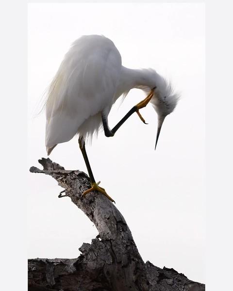 bird cleaningmp4.mp4