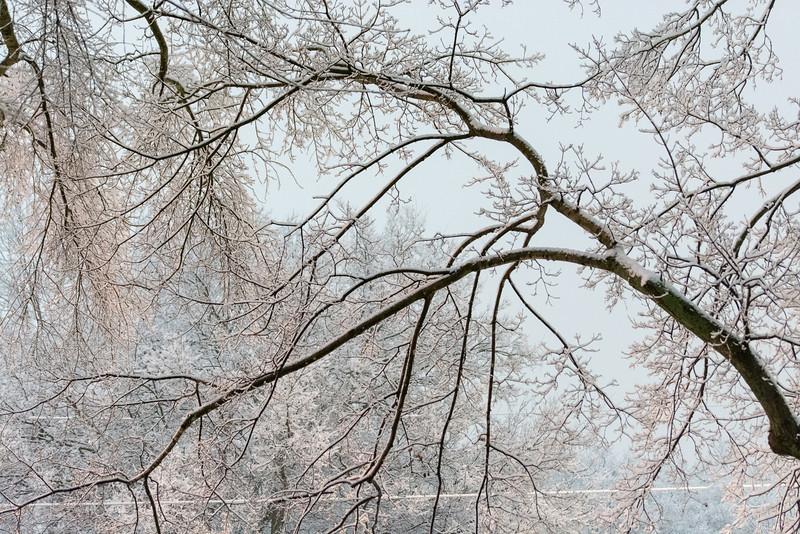 20140212-snow-DSC_4562.jpg