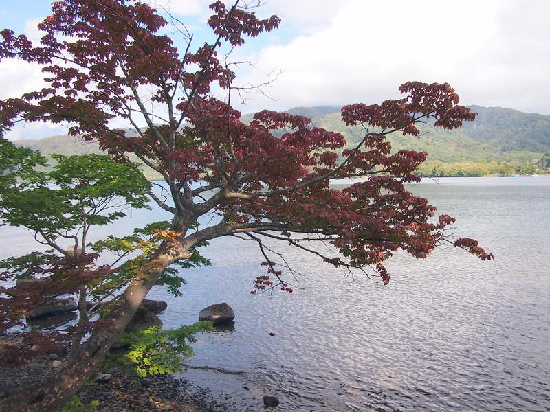 P9297751-red-tree.JPG
