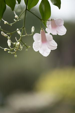 151025South Coast Botanic Garden