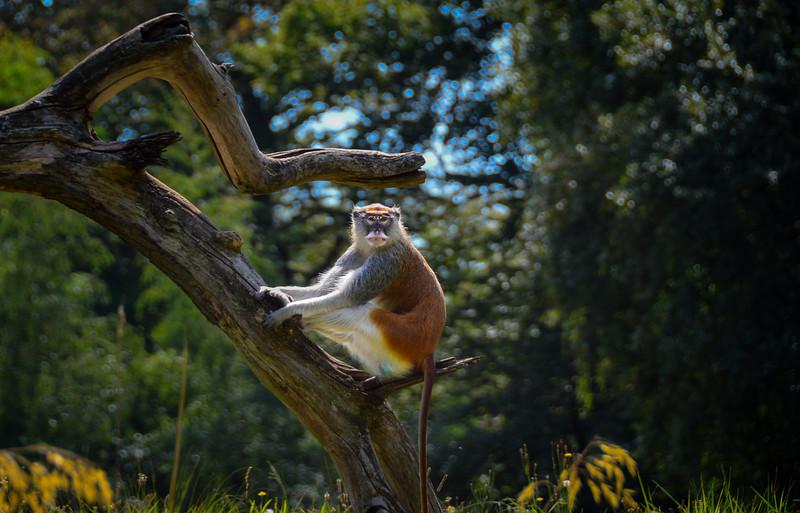 Woodland Zoo 09-09-064.jpg