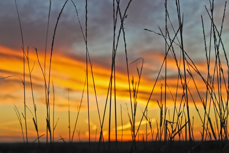 12466_Lauren Cope sunset through grass_1656x1104.jpg