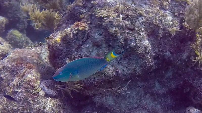 Ciesla-GOPR6658-1 - KC Blue fish.jpg