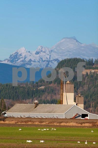 Farm & Mt. Baker 0403.jpg