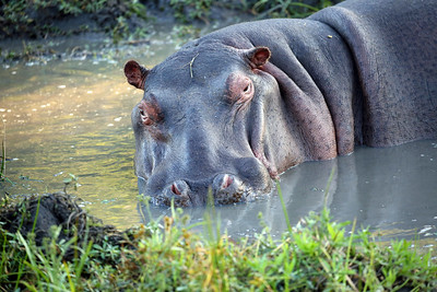 HIPPO TWO