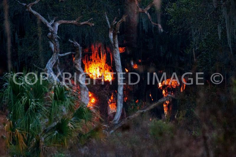 burningtrees.jpg