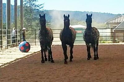 2016 BEAUTIFUL HORSES AT BELOS CAVALOS