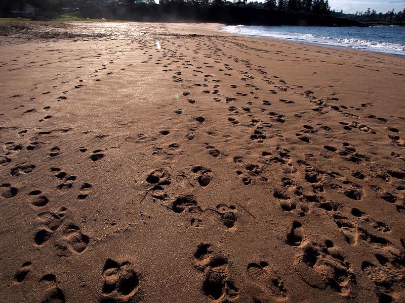 Sandy Beach w.jpg