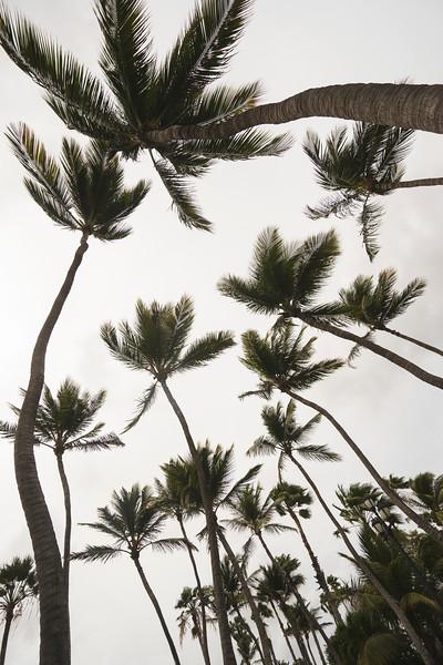 palmtreeup.jpg