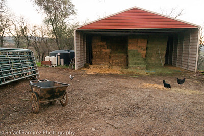 LongDream Farm