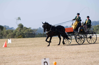 Victorian Carriage Driving Champs - Gallery 4