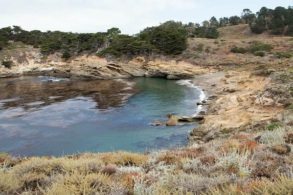 Point Lobos State Preserve - Aug 2014
