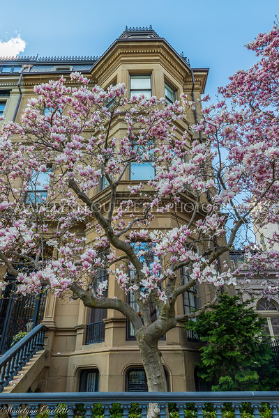 Magnolia Front and Center