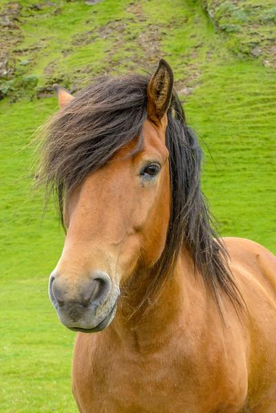 ICELAND-HORSES 4-24-Edit.jpg